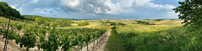 IMG_002365_DxO-vineyards