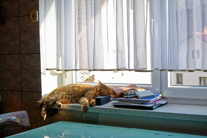 the_cat_DxO